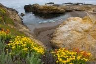Mendo wildflowers